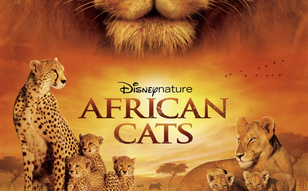 african-cats-poster